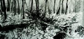 »Wald groß« Isabel Glapa