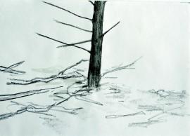 »Wald 3b« Isabel Glapa